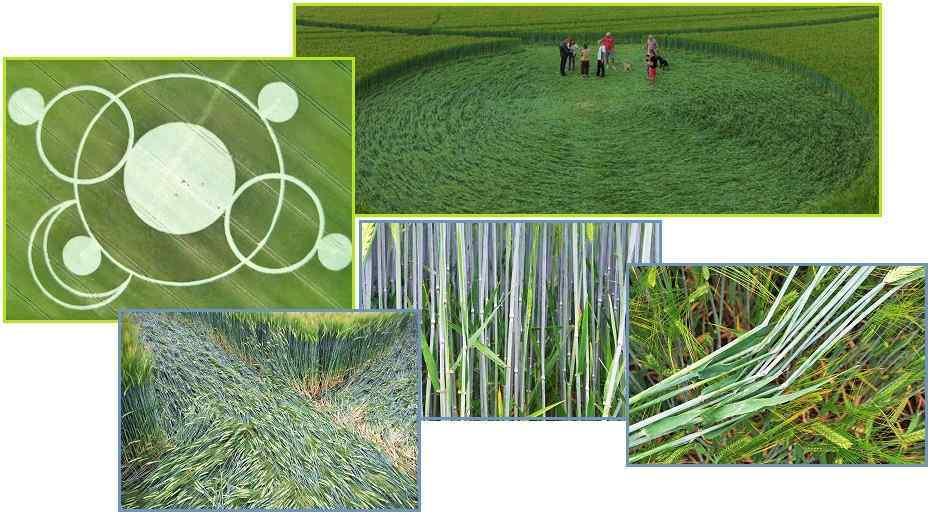 Crop Circles en el mundo - Página 2 17ju002